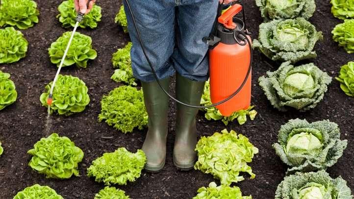Agrotóxicos na horta