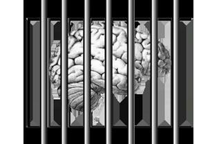 A história continua: o cérebro nosso de cada dia - parte 2